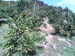 平岡農園2.JPG